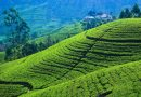 Amidst enchanting cool breeze, wanna enjoy piping hot, fresh tea with spicy sea food? Ayubowan Sri Lanka !