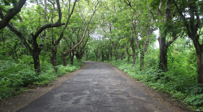 Aarey milk colony road